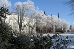 Winter im Rosengarten