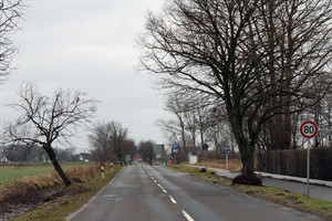55 Alleebäume sollen in der Doberaner Landstraße neu gepflanzt werden, dafür muss das Tempo reduziert werden