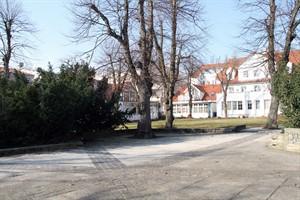 Die drei Bäume in der Mitte des Georginenplatzes bleiben stehen, werden aber nicht nachgepflanzt