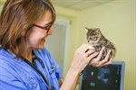 Tierklinik Rostock als katzenfreundliche Klinik ausgezeichnet