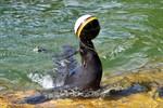 Zoo-Orakel Daisy tippt auf Sieg von Deutschland gegen Nordirland