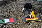 Zoo-Orakel Ingrid tippt auf Sieg von Deutschland gegen Italien