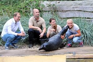 Küsschen vom für die Seehund-Taufepatin Carolin Haase (Foto: Joachim Kloock)