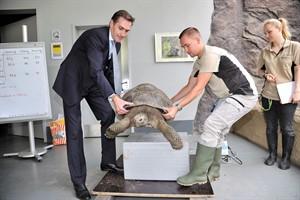Zusammen bringen die vier Galapagos-Riesenschildkröten im Rostocker Zoo 242,2 kg auf die Waage - Wiro-Chef Ralf Zimlich (l.) half tatkräftig mit (Foto: Joachim Kloock)
