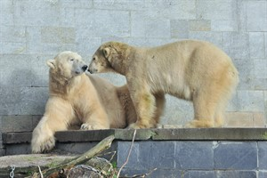 Zwei, die sich gut verstehen, Vilma und Lars, die Eltern von Fiete. Sie sehen sich bald wieder. (Foto: Joachim Kloock)