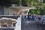 Zoo Rostock: Abschied von den Eisbären