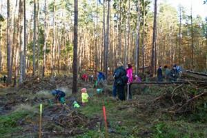 Die Aktion Bürger pflanzen Bäume lockte etwa 150 Helfer in die sonnige Rostocker Heide