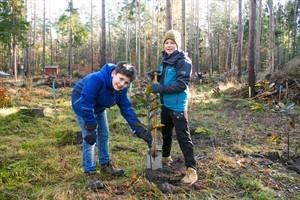 Arun und Mareno pflanzen Esskastanien in der Rostocker Heide