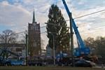 Tannenbaum für Rostocker Weihnachtsmarkt 2016 aufgestellt