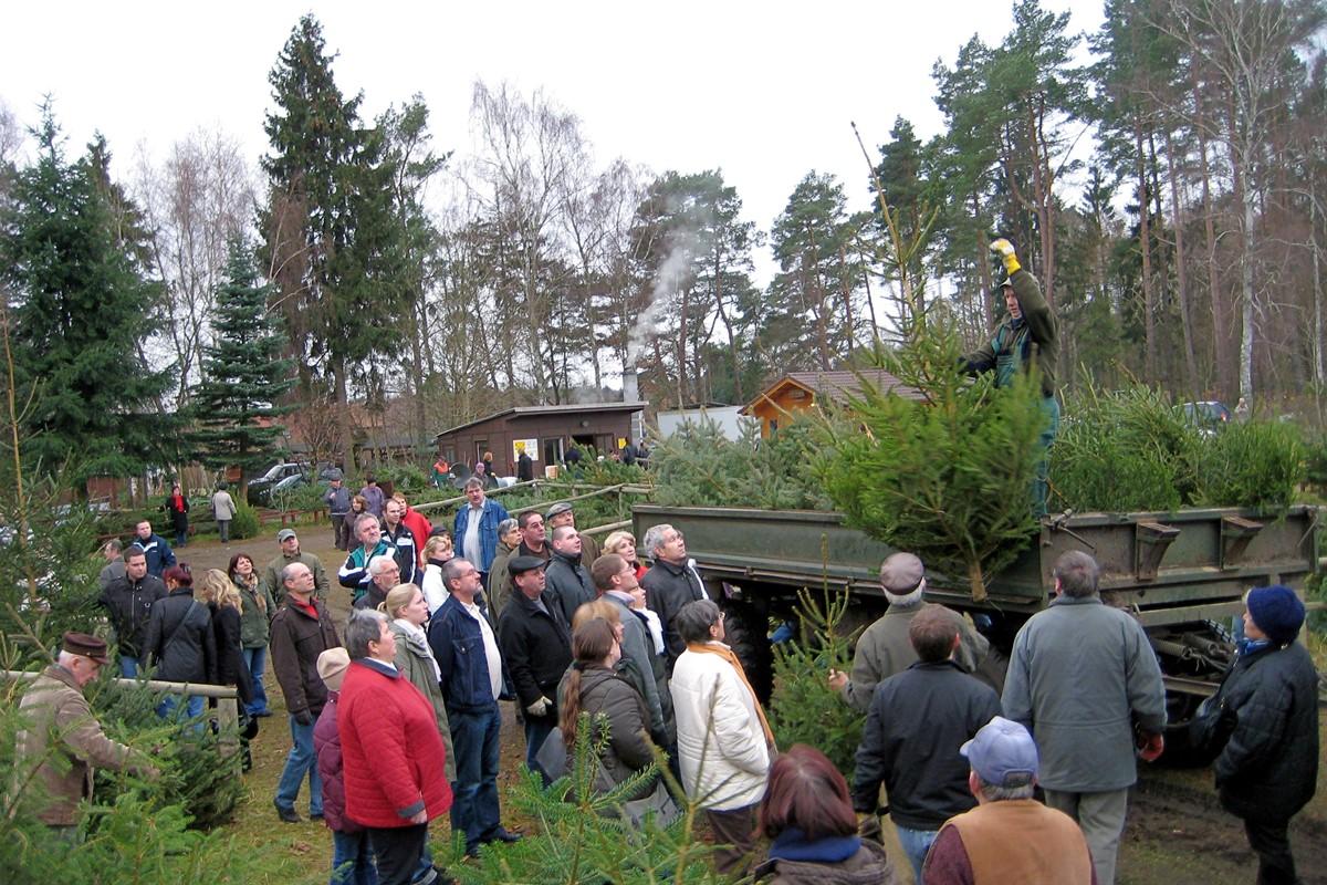 Weihnachtsbaumverkauf des Stadtforstamtes startet am Donnerstag ...