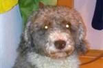 Bellendes Schaf? Tierhalter will Hundesteuer sparen