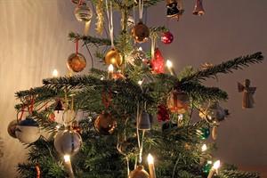 Die Weihnachtsbaum-Entsorgung findet in Rostock ab dem 2. Januar 2017 statt