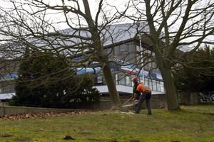 Bäume werden vor der Stadthalle gefällt, damit die Baustelle eingerichtet werden kann.