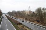 385 neue Bäume bei Frühjahrs-Baumpflanzung in Rostock