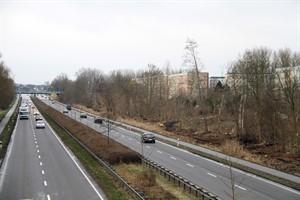 Nach dem Kahlschlag an der Stadtautobahn Höhe Evershagen kommen zwischen Straßenbahn- und S-Bahnhof-Fußgängerbrücke 268 Jungbäume als Windschutzpflanzung in den Boden (Foto: Archiv)