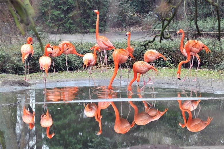 Ende der Stallpflicht - Vögel im Zoo Rostock dürfen wieder ins Freie