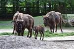 Wisentmädchen im Zoo Rostock auf den Namen Willow getauft