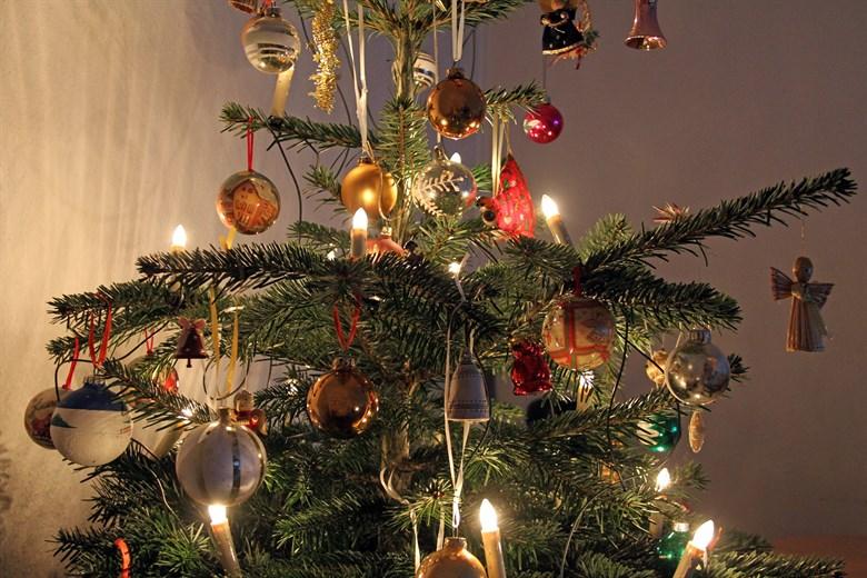 Weihnachtsbaum rostocker heide