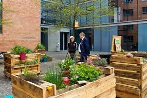 Neue Hochbeete für den Campusgarten am Institut für Biowissenschaften der Uni Rostock