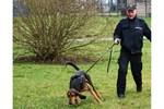 Polizeihund Helge findet vermisstes Mädchen