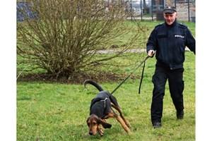 Polizeihund Helge findet vermisstes Mädchen - hier in Aktion mit Diensthundeführer PHM Albrecht (Foto: Polizei Rostock)