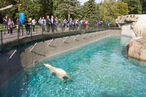 Die ersten Besucher im neuen Polarium im Zoo Rostock