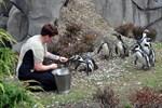Humboldtpinguine sind die ersten Bewohner des Polariums