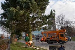 Weihnachtsbaum wird am Kröpeliner Tor zum Rostocker Weihnachtsmarkt aufgestellt.