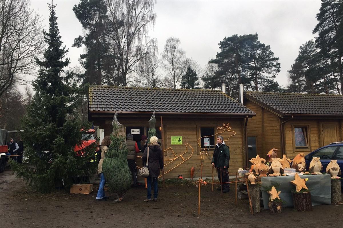 Weihnachtsbaumverkauf in der Rostocker Heide startet am 6. Dezember ...