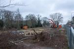 Baumfällungen am Rosengarten - Ortsbeirat sauer