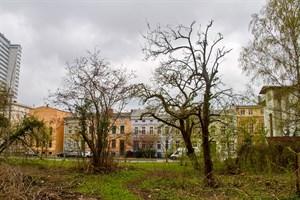 Alte Obstbäume in der August–Bebel–Straße