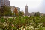 Neue Blumenwiesen für Rostock