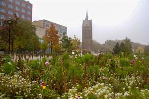 Neue Blumenwiesen für Rostock (Foto: Archiv)