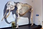 """Sonderschau """"Rostocks Tierwesen"""" an der Universität eröffnet"""