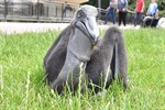 Klassik-Nacht und Pelikan-Nachwuchs im Zoo Rostock
