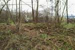 Illegale Grünschnittablagerungen an der Tessiner Straße