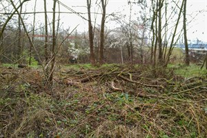 Illegale Grünschnittablagerungen an der Tessiner Straße (Foto: Amt für Stadtgrün, Naturschutz und Landschaftspflege)