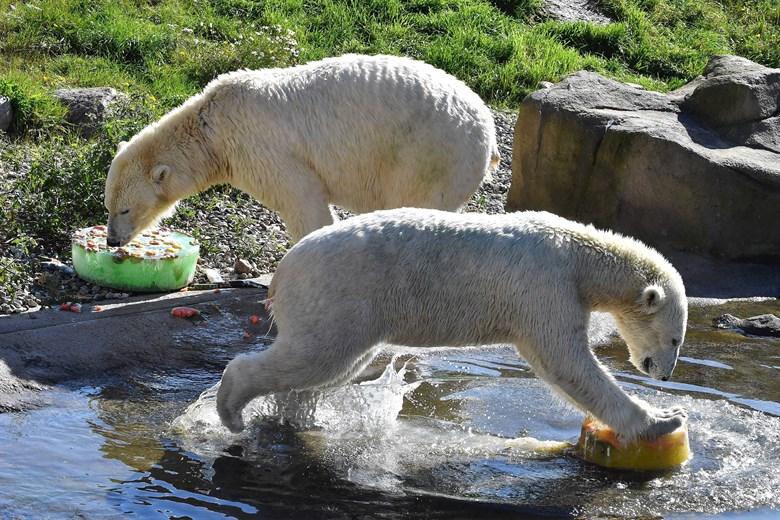Ein Jahr Polarium im Zoo Rostock
