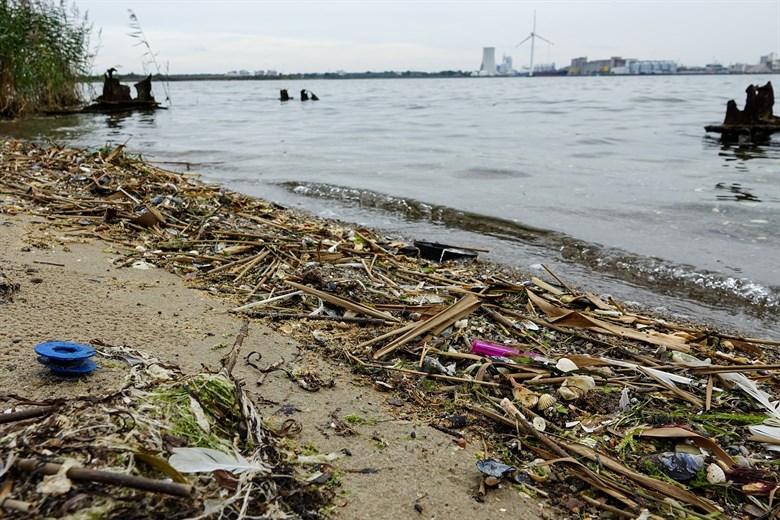 Müllsammeln in Rostock am Internationalen Küstenputztag