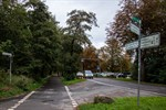Warnemünde: Stadt will 110 Bäume für Radweg fällen