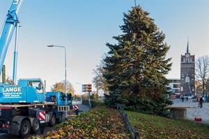 Tannenbaum für Rostocker Weihnachtsmarkt 2019 aufgestellt
