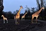Zoolights - tierische Leuchtfiguren im Zoo Rostock