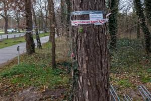 """""""Wo Räder rollen, müssen Bäume weg!"""" - Protest gegen Baumfällungen im Küstenwald Warnemünde"""