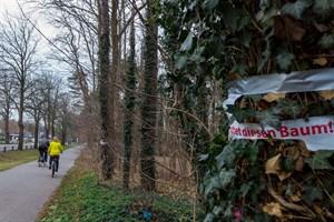"""Rettet diesen Baum! - Müssen 120 Bäume für """"nachhaltiges Fahrradfahren"""" weichen?"""