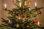 Weihnachtsbaum-Entsorgung erfolgt ab 6. Januar 2020