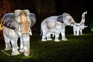 Zoolights in Rostock: Die Elefanten sind zurück im Zoo - allerdings 'nur' aus Draht und Ballonseide