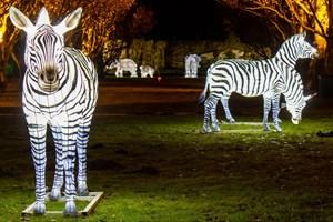 Zoolights - mehr als 250 Leucht-Tiere aus Ballonseide im Zoo Rostock