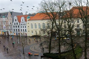 Die Tauben am Uniplatz Rostock wurden vom Sirenen-Test aufgeschreckt
