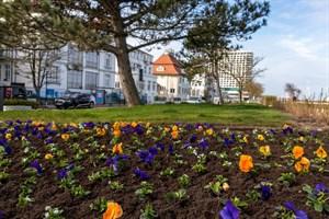 Frühjahrsbepflanzung in Warnemünde