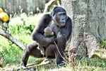Gorilla-Babys im Zoo Rostock getauft
